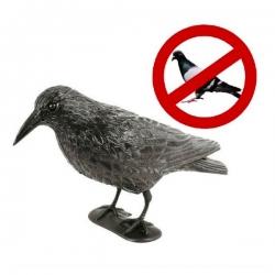 Havran odstrašujúci iné vtáky